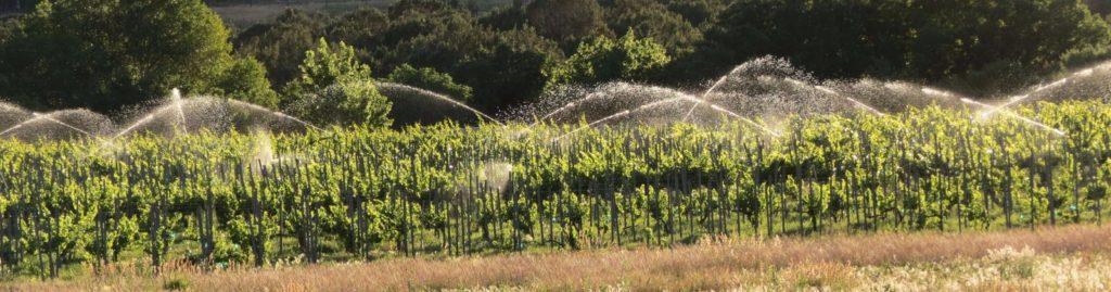 TC vineyard 1