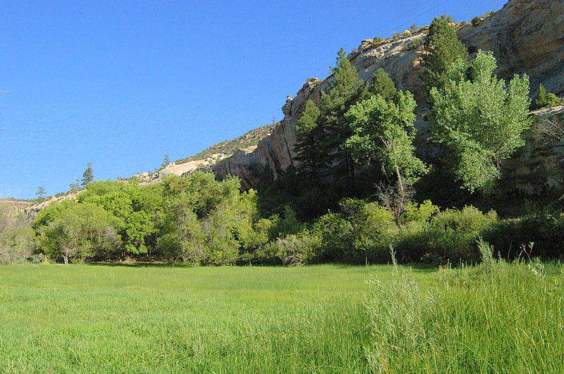 pasture&trees (1)